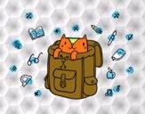 Gatto in uno zaino