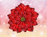 Fiore di dahlia