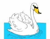 Disegno Cigno nell'acqua  pitturato su alessia07