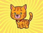 Un gatto domestico