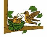 Famiglia colibrì
