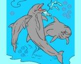Delfini che giocano