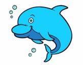 Delfino delle Amazzoni