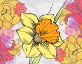 Disegno Fiore de niarciso pitturato su stellanera
