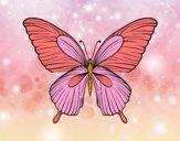 Farfalla tropicale