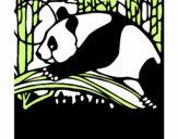 Oso panda che mangia