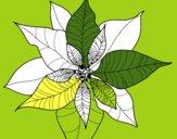 Fiore di poinsettia