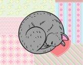 Gattino riposa