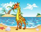 Giraffa femminile