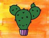 Cactus ficodindia
