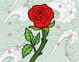 Rosa selvaggia