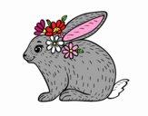 Coniglio primavera
