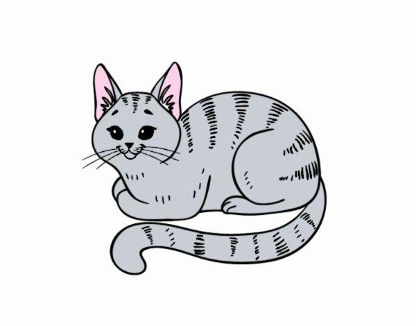 Disegno Giovane gatto pitturato su Yurip
